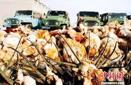 青海警方:捕杀500余只藏羚羊案2疑犯在逃11年后被抓获