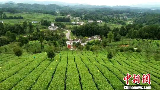 贵州前三季度第一产业增速全国居首