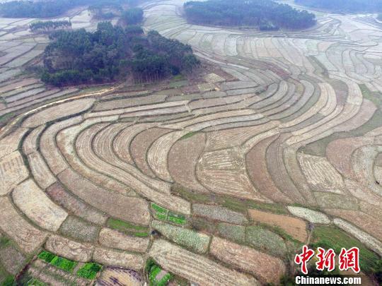 秋收后的兴宾区三五镇古炼村的梯田美如画。 蒋雪林 摄