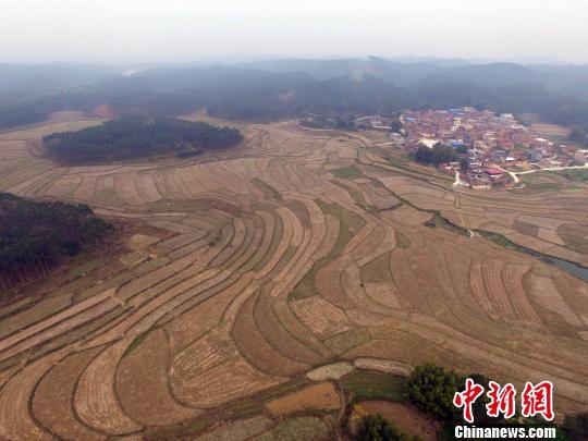 兴宾区三五镇古炼村的梯田充满田园诗意。 蒋雪林 摄
