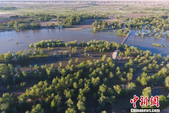 河水漫過河岸灌溉兩岸的植被?!£愌蟆z