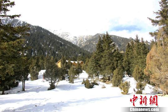 哈里哈图国家森林公园是西北干旱地区海拔最高的森林公园,也是青海省海西州境内天然林保存最完整、林草覆盖率最高的松柏共生的原始森林。 钟欣 摄