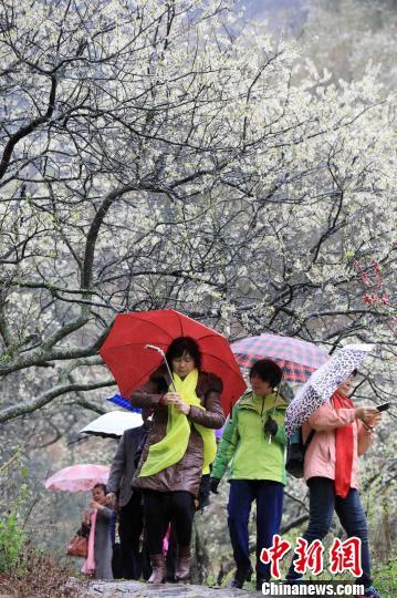 游客在铜板屯踏青赏花。 谭凯兴 摄