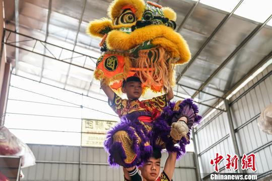 图为狮舞表演。 陈冠言 摄