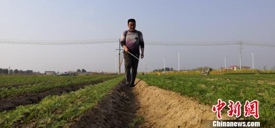 种植户在为胡萝卜苗除虫。 李雪其供图 摄