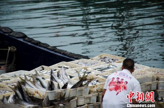 准备上岸的鱼获 翟李强 摄