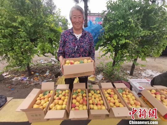 正在销售的杏果。大同市聚乐乡提供