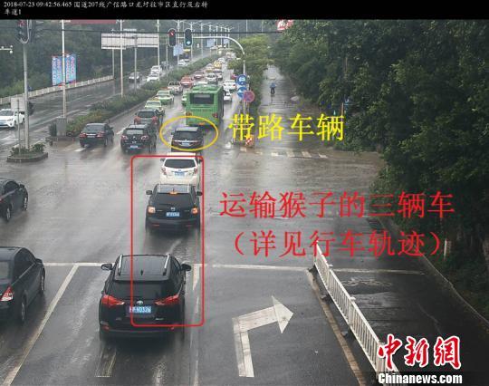 南宁海关查获食蟹猴2735只为中国海关缉私侦办该类最大案件