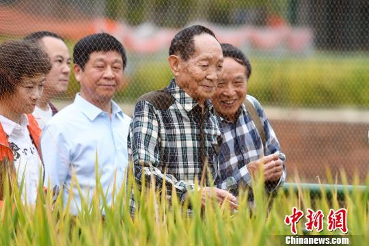 袁隆平在國家雜交水稻工程技術研究中心內的第三代雜交水稻試驗基地觀察稻谷長勢。 楊華峰 攝