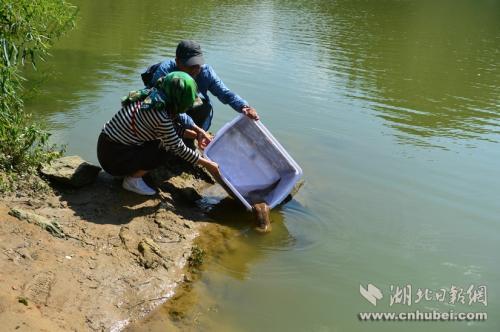 辽宁教师夫妻驱车三天奔赴湖北 只为放生娃娃鱼