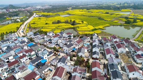 这是在江苏省南京市高淳区桠溪国际慢城拍摄的油菜花田和民居 李响摄