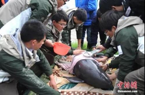 资料图:研究人员为长江江豚浇水。<a target='_blank' href='http://www.chinanews.com/'>中新社</a>记者 张娅子 摄