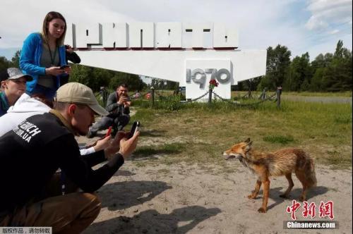 本地工夫2019年6月2日,几名客正在切我诺北葵旱犁站四周旅时发明一只狐狸,纷繁摄影留怂