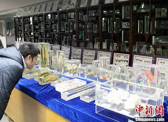 資料圖:重慶中藥博物館 <a target='_blank' href='http://www.chinanews.com/'>中新社</a>發 周毅 攝