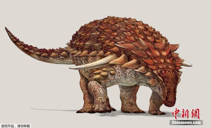 资料图:2017年8月4日讯,加拿大德拉姆黑勒,皇家泰瑞尔博物馆展示1.1亿年前的多刺甲龙复原图,该多刺甲龙长约5.5米,重达1.3吨,被称为恐龙中的坦克。