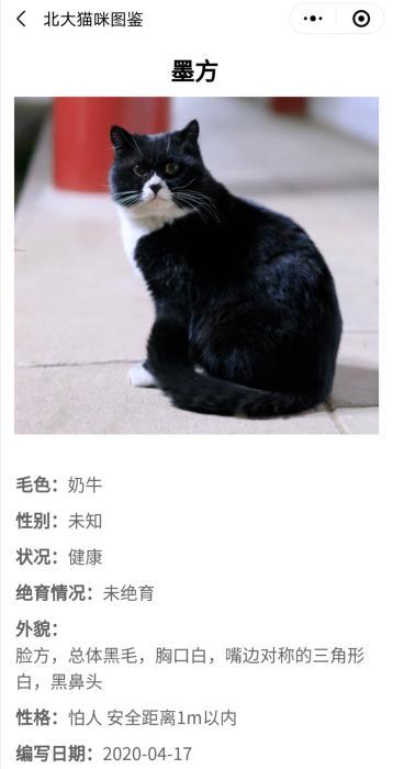 """""""北大流浪猫图鉴""""截图"""