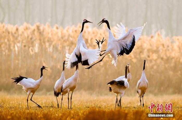 《【恒达账号注册】文化和自然遗产日来了 这些珍贵世界遗产你了解多少?》