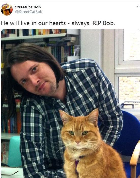 图为猫咪鲍勃和它的主人詹姆斯·鲍恩。图片来源:社交媒体截图