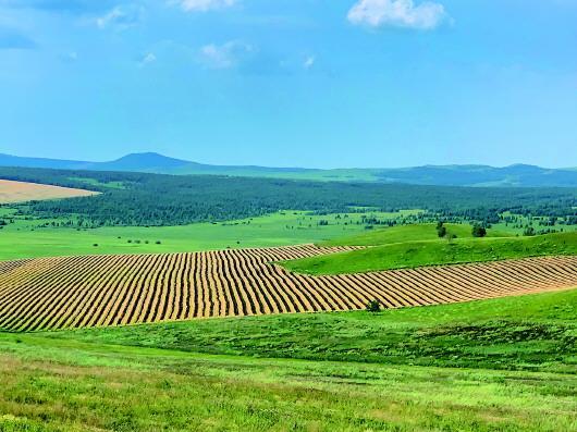 内蒙古一旗县铲毁2万多亩将熟庄稼 为完成退耕指标?