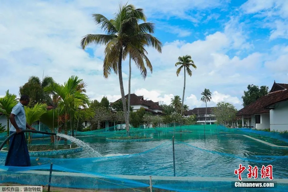 资料图:印度库玛拉孔一豪华度假村的游泳池被改造成养鱼场。受疫情影响,往日热闹的度假村变得冷清。