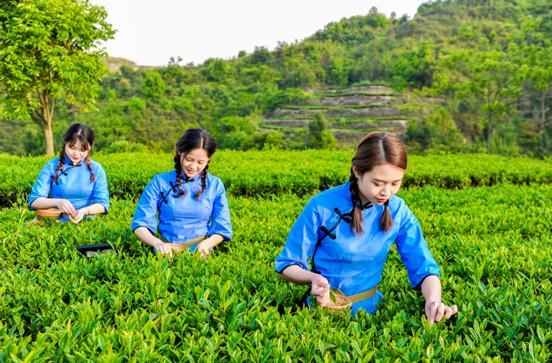 八马茶业诠释茶企品牌成长:以茶助农 诚信经营
