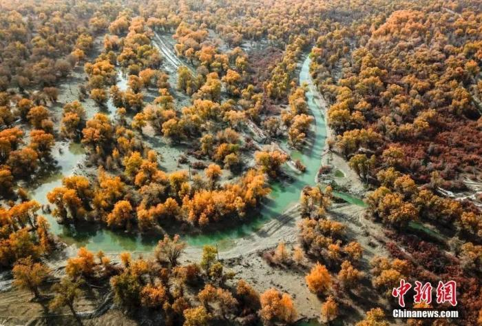 资料图:航拍新疆阿克苏地区沙雅县塔里木河沿岸的原始胡杨林。中新社记者 刘新 摄