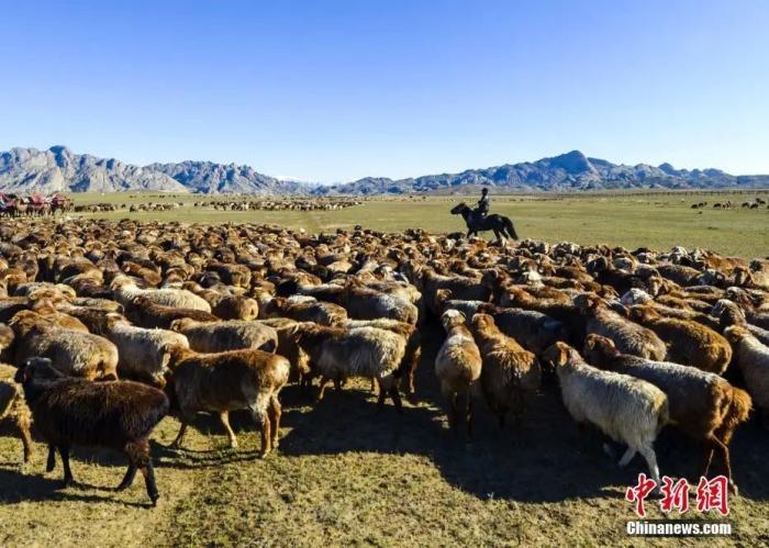 资料图:新疆阿勒泰地区福海县沙尔布拉克牧场,当地牧民在阿勒泰山古老的牧道附近放牧。 中新社记者 刘新 摄