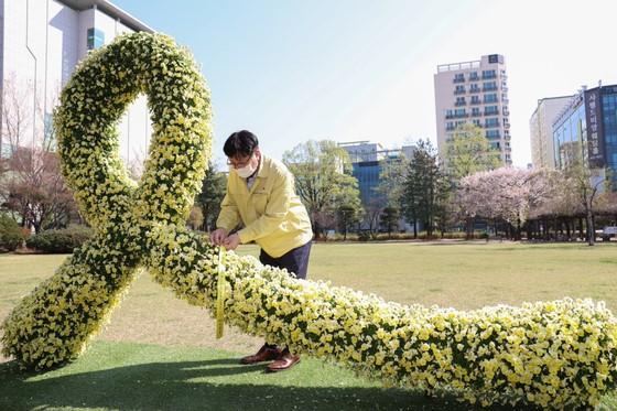 """2021年4月16日,韩国迎来""""世越号""""沉船事故7周年纪念日。图为在仁川市教育厅中央草坪广场设置的象征追悼遇难者的黄丝带。(图片来源:韩国《中央日报》)"""