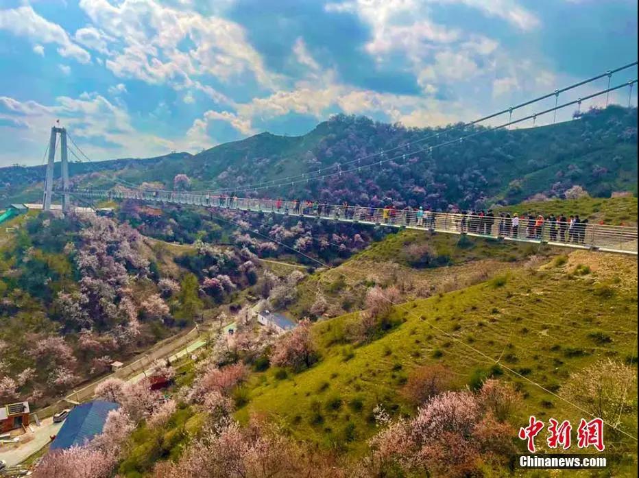 资料图:新疆霍城县中华福寿山景区玻璃栈道,游客打卡、观赏花海。姚俐 摄