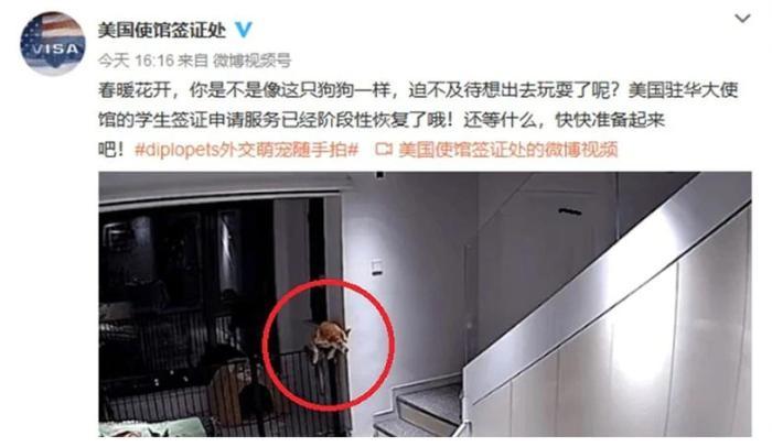 """今天不是百年前!美驻华使馆为微博发""""狗""""论道歉"""