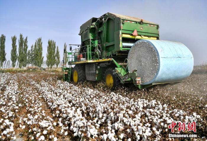 资料图:2019年10月21日,新疆沙雅县古勒巴格镇,大型采棉机正在进行机械化采摘。<a target='_blank' href='http://www.chinanews.com/'>中新社</a>记者 刘新 摄