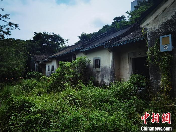 """知名香港史专家刘蜀永日前接受记者专访。他日前冒着酷暑来到位于香港元朗凹头的潘屋,看着荒凉的庭院和房顶的断瓦,他不无遗憾地说:""""这样的历史建筑在香港本来就不多,如此荒废太可惜了。""""记者 索有为 摄"""