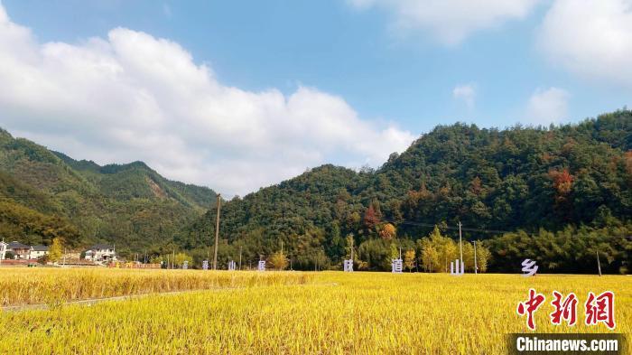 资料图:浙江某地农村。 钱晨菲 摄