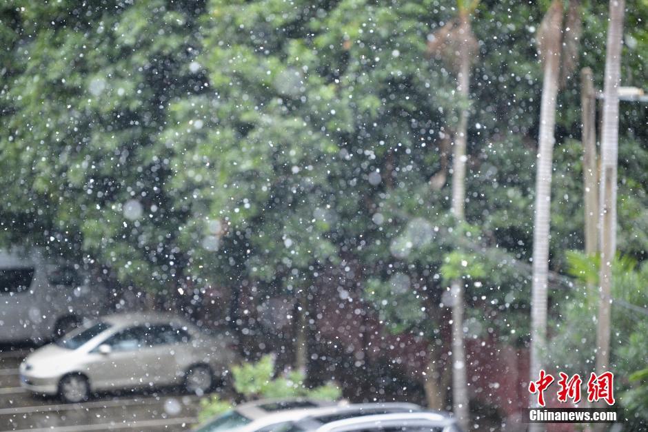 广州时隔近五十年再飘雪