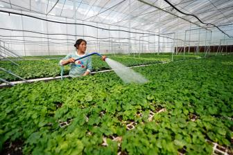 China Shouguang vegetable price index down 2.27 pct