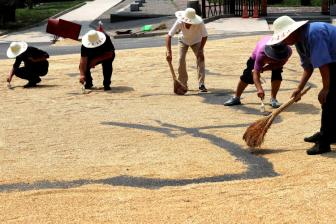 China makes steady efforts to increase grain production capacity: white paper