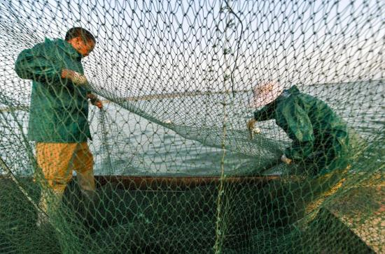 Cage fisheries bow out for sake of environment