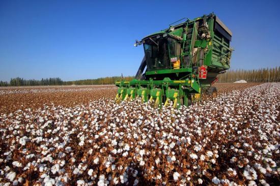Technology helps Xinjiang cotton break yield record