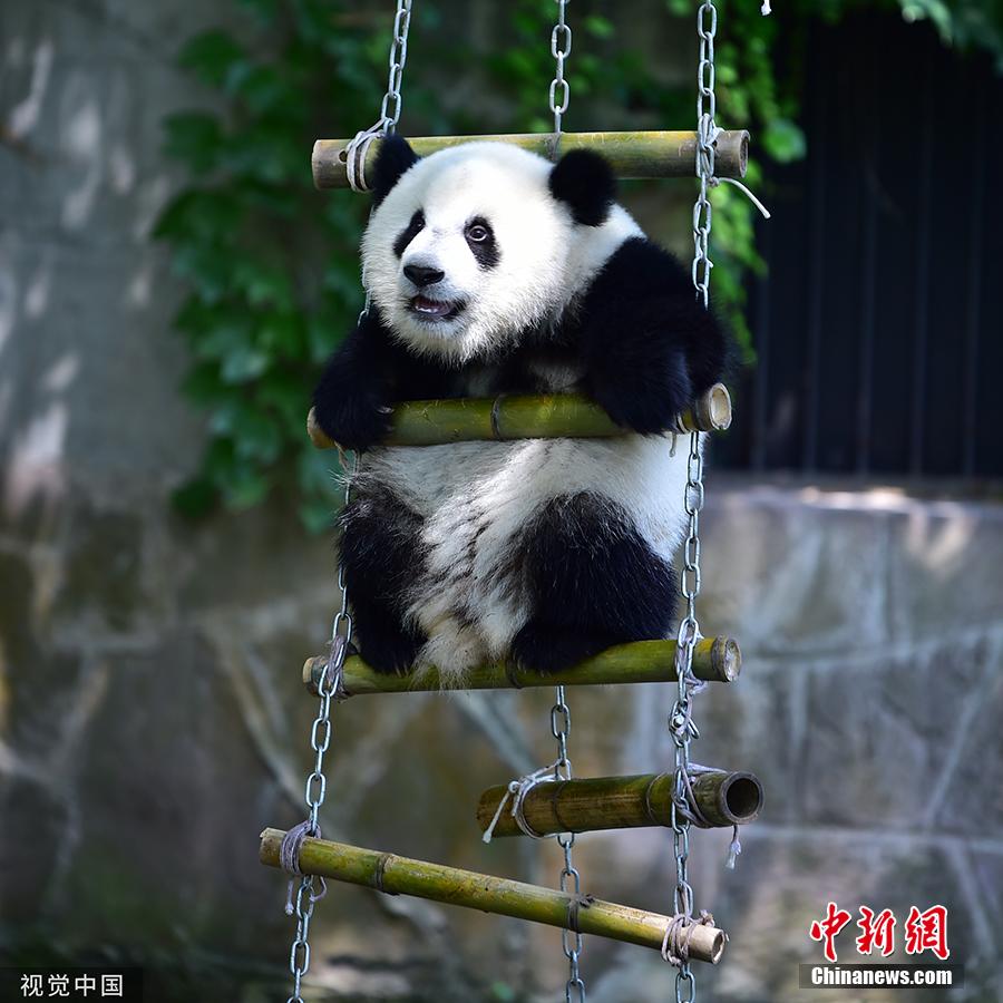 【國際熊貓日特刊】我萌我驕傲