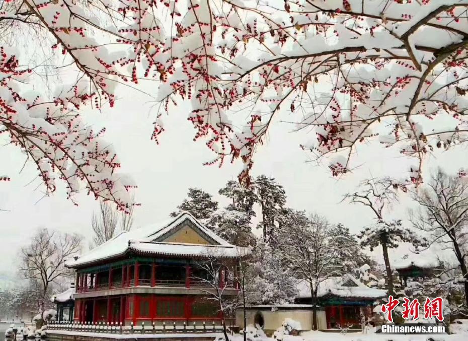 河北承德迎大雪天气 林木落白飞檐披雪