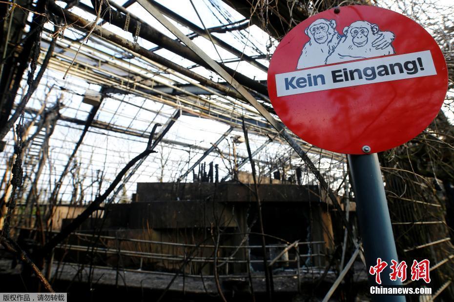 德國一動物園發生火災 30多只動物死亡