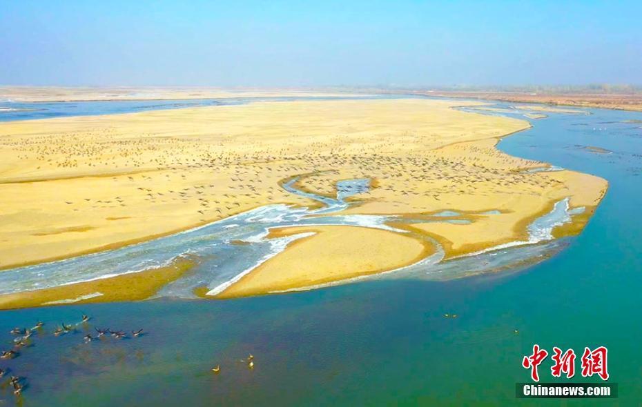 新疆塔里木河支流阿瓦提河段成为鸟类栖息乐园
