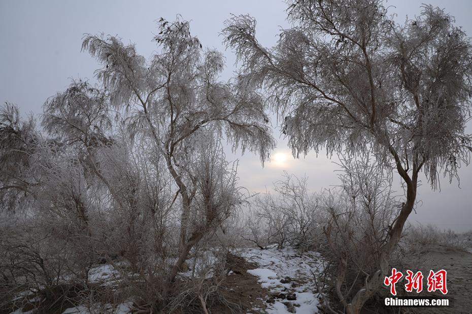 新疆沙漠边缘雾凇美景迷人
