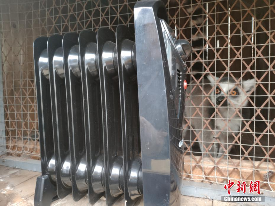 """动物""""花式""""过冬 各种取暖利器上阵"""