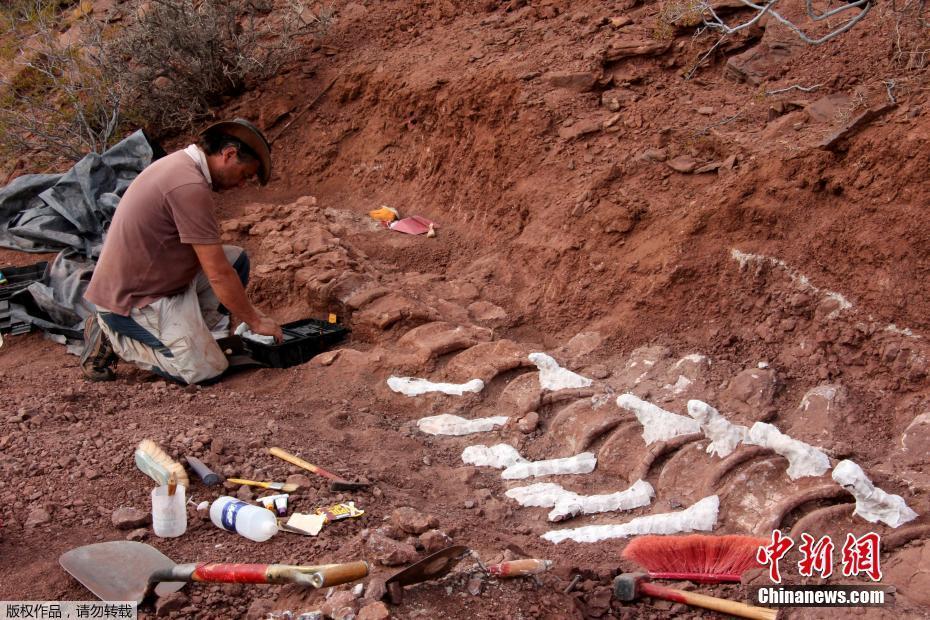 """阿根廷发现9800万年前恐龙化石 或为史上""""最大""""恐龙化石"""