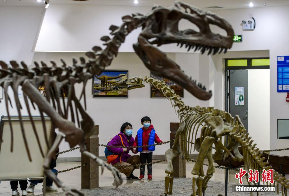 新疆昌吉恐龙馆成为假期研学游打卡地