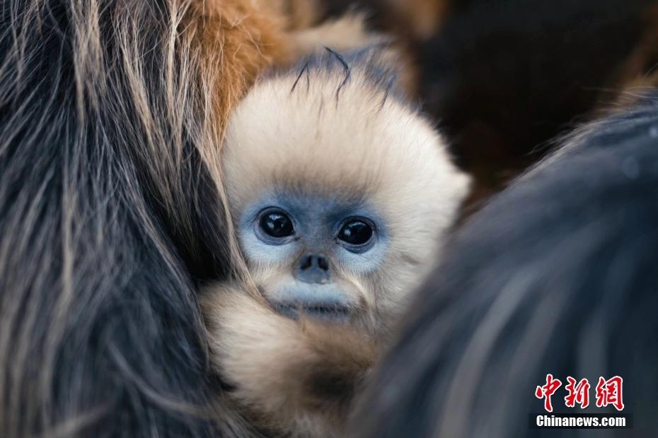 【图刊】大美华夏 图看中国拥有的世界自然遗产