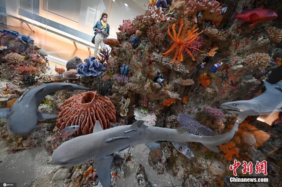 打卡德国法兰克福博物馆珊瑚礁展 展品栩栩如生