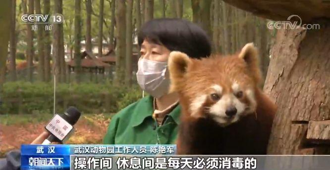 武汉动物园今起有序恢复开放