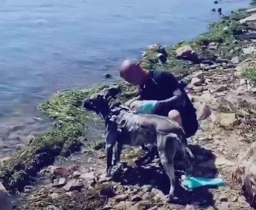 游客在云南大理洱海边清洗宠物狗 被罚1000元